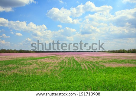 Beautiful landscape of lavender field