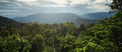 Beautiful landscape of mountain view and tropical rain-forest at sunset time with golden sunlight. Concept of green natural virgin forest.