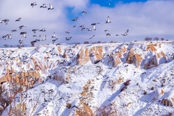 Beautiful landscape of pigeons are flying in Cappadocia pigeon valley, Uchisar, Turkey. Flock of fluffy pigeons on white snow in Pigeon Valley in winter