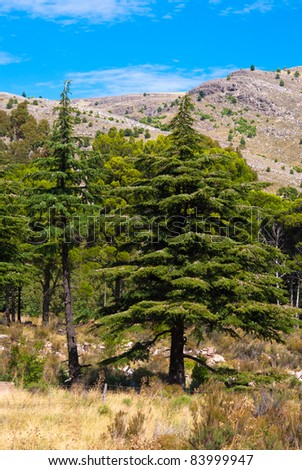 Beautiful landscape of pine forest and mountains with blue sky behind in Sierra de la Ventana, Argentina