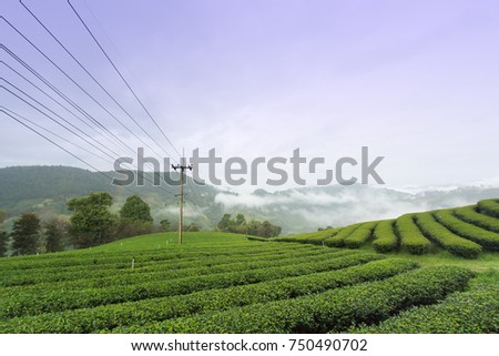 Beautiful Landscape of Row Lush Tea Farm Plantation with Electric Pole on High Space with Fog and Aura in Blue Sky and Mountain Background. Copy Space for Text. - Shutterstock ID 750490702
