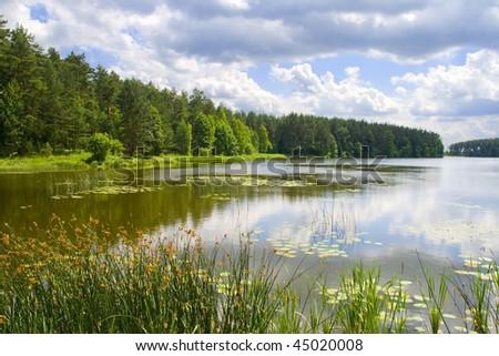 Beautiful landscape of summer lake