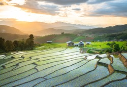 Beautiful landscape of terraced rice paddy Fieldat Chiang Mai province Thailand