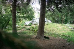 Beautiful landscape of the urban arboretum. Summer landscape with trees, stones and grass.