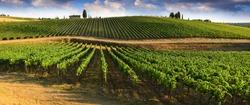 Beautiful landscape of Vineyards in Tuscany. Chianti region in summer season. Italy.