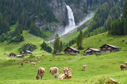 Beautiful landscape panorama from Swiss Alps, with cows, waterfall, meadow and farm houses. Taken in Äsch (Asch) village, canton of Uri, Switzerland.