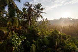 Beautiful landscape, sunrise of the tropical jungle.