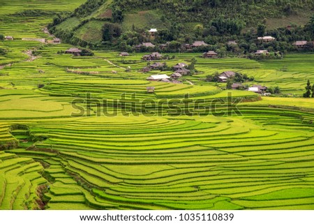 Beautiful landscape view of house and village in rice terrace , rice terrace field , rice paddy field at tu le ,mu cang chai , vietnam , Vietnam is most important export rice gooods in the world #1035110839