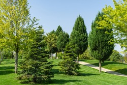 Beautiful landscape view with shaped trimmed trees and firs, green grass lawn in city park 'Krasnodar' or 'Galitsky park' in sunny autumn 2020