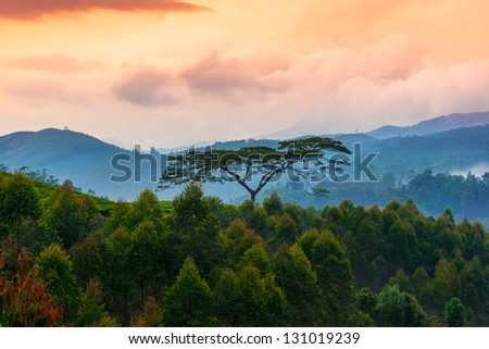 beautiful landscape with a trees and mountains in a pre-dawn haze