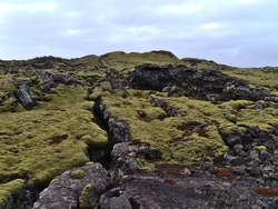 Beautiful landscape with deep rocky fissure on volcanic lava field covered by green moss and lichens near Grindavik, Reykjanes peninsula, Iceland on cloudy winter day.