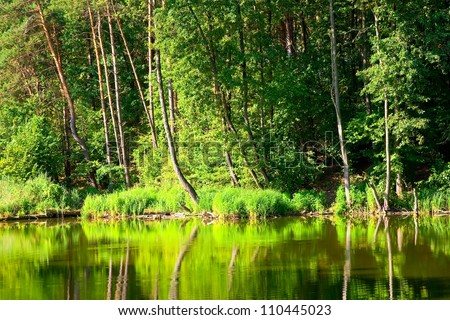 Beautiful landscape with forest lake