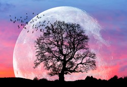 Beautiful landscape with lone tree and silhouete of birds - In the background full moon in amazing sunset