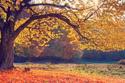 Beautiful landscape with magic autumn trees and fallen leaves  (harmony, relaxation - concept)