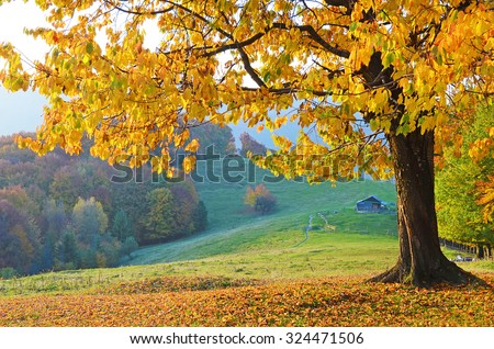 Stock Photo Beautiful landscape with magic autumn trees and fallen leaves in the mountains (harmony, relaxation - concept)