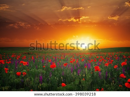 Beautiful landscape with nice sunset over poppy field. Composition of Nature