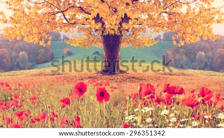Beautiful landscape with poppy flowers and single tree with yellow autumn foliage in the mountains in pastel colors. Instahram effect. (natural background)