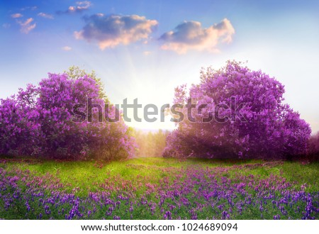 Beautiful landscape with spring flowers.Lilac trees in blossom