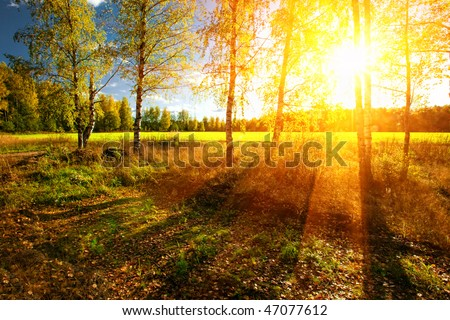 Beautiful landscape with summer forest and sunset