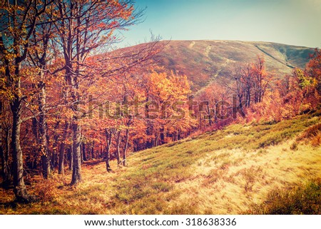 Beautiful landscape with sunny autumn forest in mountain, vintage picture