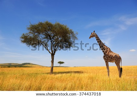 Beautiful landscape with tree and giraffe in Africa #374437018