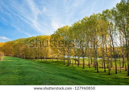 beautiful landscape with trees and grass