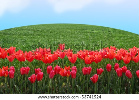 stock-photo-beautiful-landscape-with-tulips-field-in-sunny-spring-morning-53741524.jpg