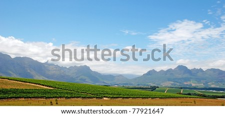 beautiful landscape with vineyard and mountains in province West Cape(South Africa)