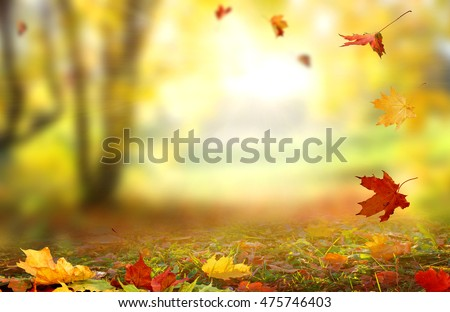 Beautiful  landscape with yellow trees,green grass and sun. Colorful foliage in the park. Falling  leaves natural background . #475746403