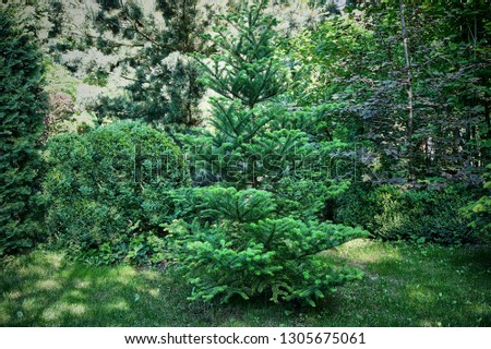 Beautiful landscaped garden with evergreens. An example of the use of evergreen Korean fir, green needles of western thuja, Japanese pine Glauka and boxwood Selective Focus #1305675061