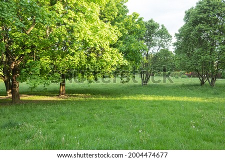 Beautiful landscaped park with space for text. Green environment in a landscaped city park. Copy space for text Stock photo ©