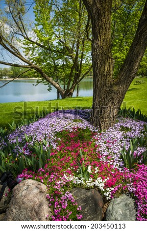 beautiful landscaping with colorful phlox covering the grounds of a large yard