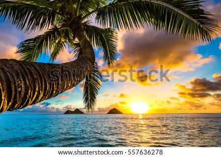 Beautiful Lanikai, Kailua Sunrise in Hawaii Zdjęcia stock ©