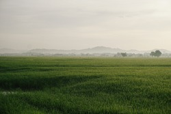 Beautiful lanscape at paddy rice field pathways, green and fresh
