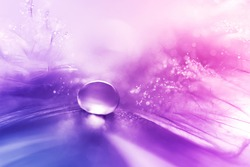 Beautiful large dew drops or rain on the poultry feather closeup. Beautiful light and blurred soft background in red and purple color. Water Drops on fluffy feather macro. Bright artistic image .