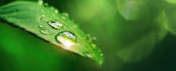 Beautiful large drop morning dew in nature, selective focus. Drops of clean transparent water on leaves. Sun glare in drop. Image in green tones. Spring summer natural background.