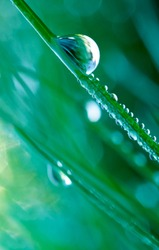 Beautiful large drop of water in the grass in the morning, macro. Grass in  morning dew in the spring summer on a green background in nature.