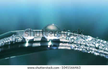 Beautiful large transparent drop of water dew on grass close up.Natural background.