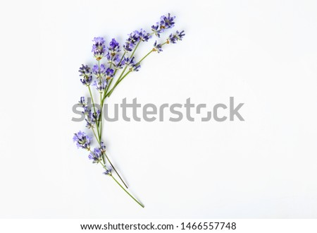 Beautiful lavender flowers on white background Сток-фото ©