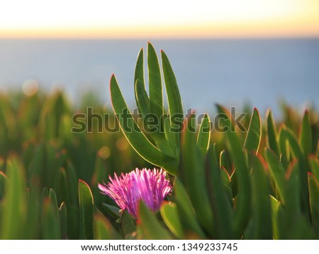 Beautiful lavender spiked flower with long, green, finger-like foliage in the foreground and foliage running into the distance. #1349233745