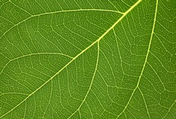 Beautiful leaf in the garden. Soft light in thegarden