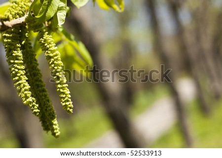 Beautiful leafs on a background of trees