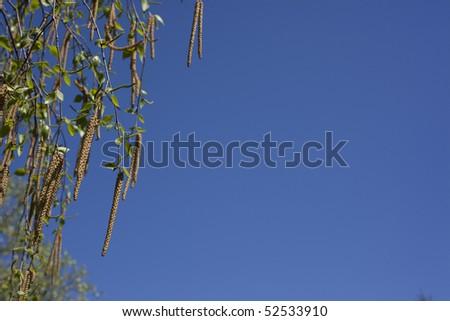Beautiful leafs on a blue sky