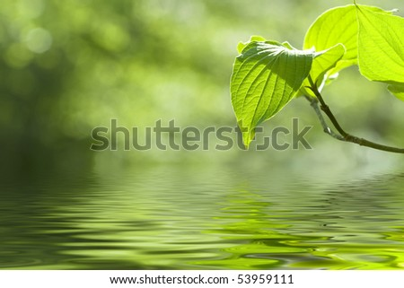 Beautiful leaves reflected in water