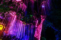 Beautiful LED lightings hanging from a big tree, mimicking the scenery in the movie