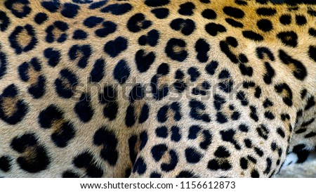 Beautiful Leopard skin texture background natural pattern, with Copy Space for Text. #1156612873