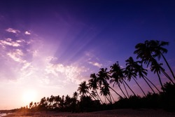 Beautiful life, sunset landscape on the tropical beach