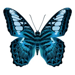 Beautiful Light Blue  butterfly upper wing profile isolated on white