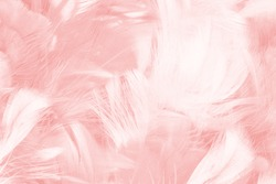 Beautiful light pink feather pattern texture background