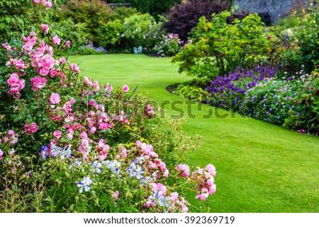Beautiful light pink rose garden #392369719
